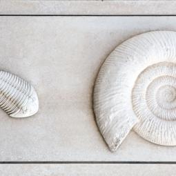 Trilobite and Ammonite - Weymouth
