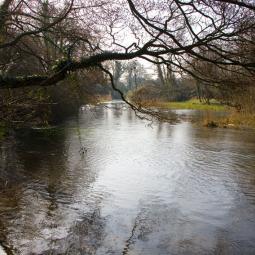 River Frome - Moreton