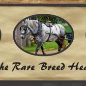 Dorset Heavy Horse Centre