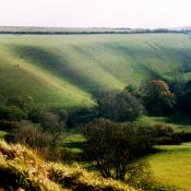 Eggardon Hill Fort
