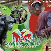 Monkey World - Wareham