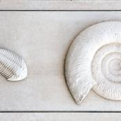Trilobite and Ammonite - Weymouth
