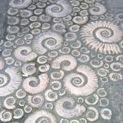 Ammonite Pavement - Lyme Regis