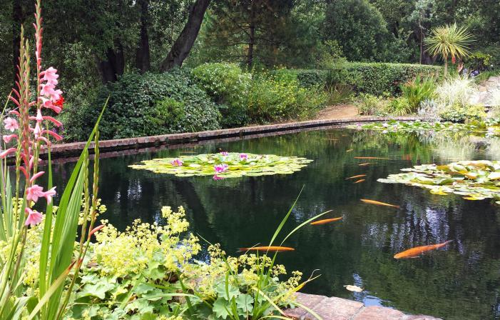 Abbotsbury Subtropical Gardens pond