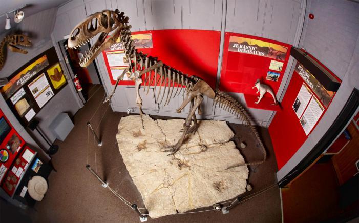 Dorchester Dinosaur Museum