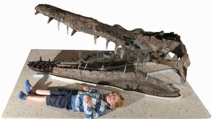 Weymouth Bay Pliosaur - Dorset County Museum