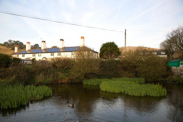 Village Duck Pond - Lulworth Cove